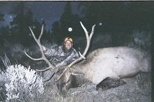 Elk Hunting Colorado with your Colorado Outfitter